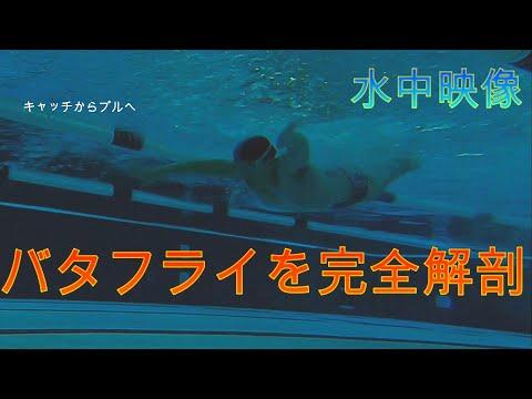 【水泳上達】プロの水陸両用トレーナーが今更聞けないバタフライの動きを丁寧に説明します!