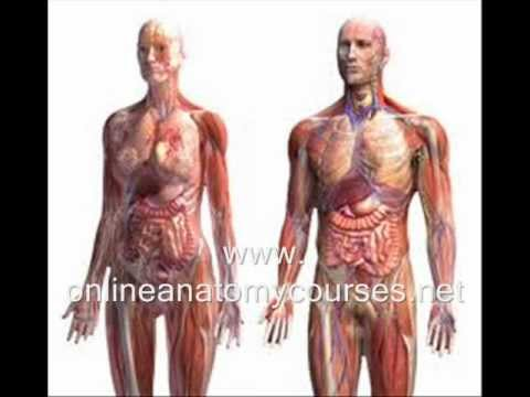 Online Human Anatomy Course - FREE 3D Software - YouTube