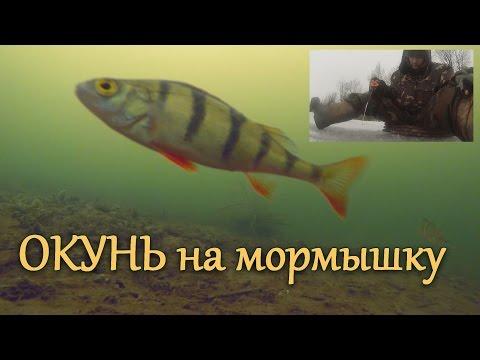 зимняя рыбалка на окуня - 2015-12-05 19:16:37