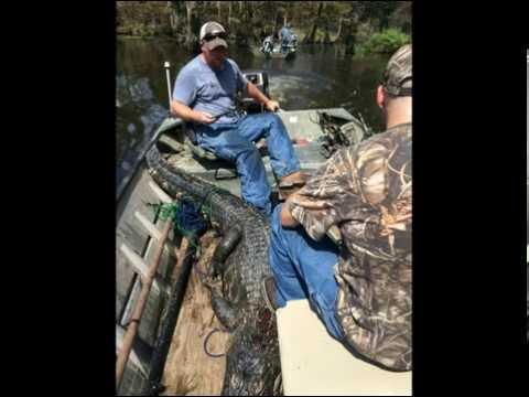 SC Gator Hunting, Lake Marion