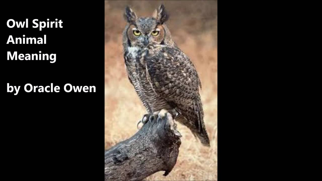 Owl spirit animal meaning youtube owl spirit animal meaning biocorpaavc Gallery
