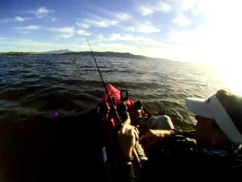 Dana point california bass fishing youtube for Fish count dana point