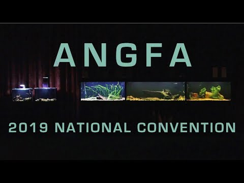 ANGFA 2019 National Convention Display Aquariums