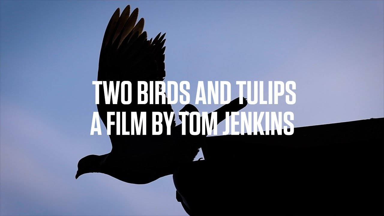 Two Birds And Tulips - A Film By Tom Jenkins
