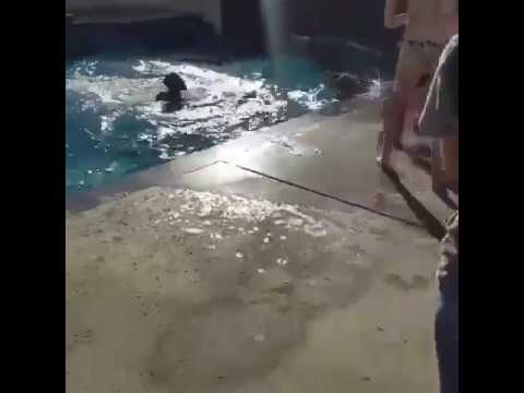 Tyler Brown Being Dragged into a pool