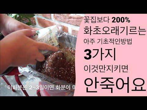 화초기르는법 화초죽지않게 오래기르기 흙배합 화분선택 금전수 스파트필름 홍콩야자 테이블야자