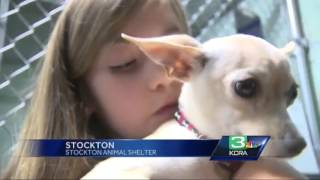 Girl donates birthday presents to help Stockton animal shelter