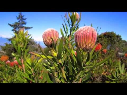 Flora and Fauna on Maui