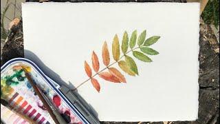 Лист рябины! Бесплатный урок рисования акварелью для начинающих!