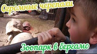 Видео для детей, огромные черепахи, носорог,  зоопарк в бергамо.