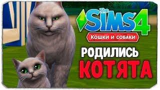 "КОТЯТА МЭРА УСИКОВА - The Sims 4 ""Кошки и Собаки"" ▮"