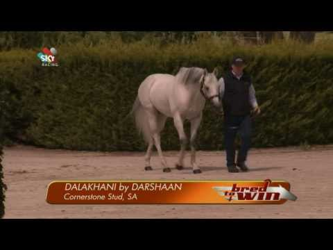 DALAKHANI Featured On Sky Racing's Bred To Win