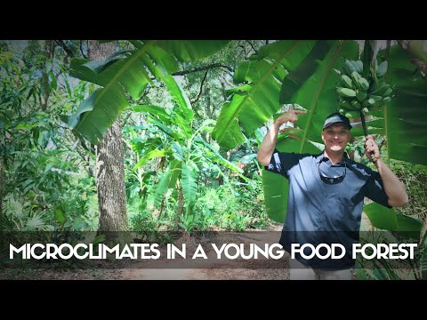 MICROCLIMATES in a Young Subtropical Food Forest - Unreal Growth! (Part 2)