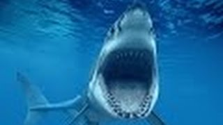 Shark attack || BBC Documentary 2015 | | National Geographic documentariy || HD documentary