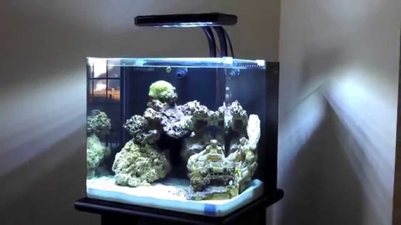 Nuvo 30 gallon aquarium by innovative marine youtube Thirty gallon fish tank