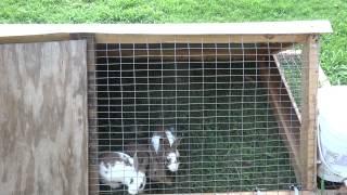New Rabbit Tractor Hutch