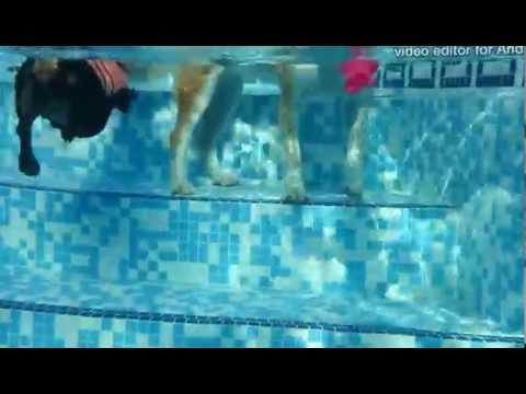 perros nadando di si al amor animal y no al maltrato