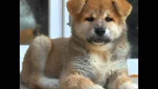 На память о моей собаке Хати...