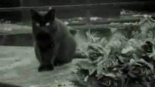 Wild Wax Combo - The Cat.wmv