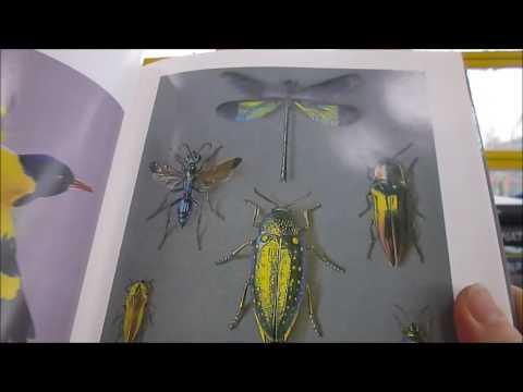 highlight-the-wild:-the-art-of-the-reid-henrys