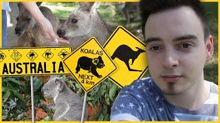 WSZEDZIE KANGURY I KOALE! - Lone Pine Koala Sanctuary