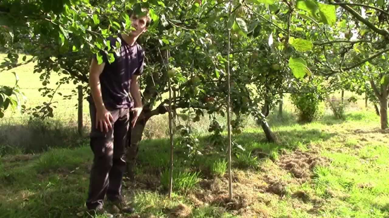 supporting heavy cropping apple trees making progs youtube