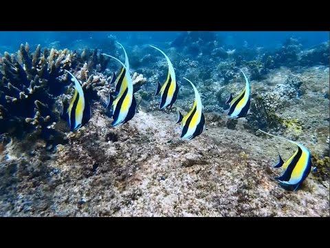 Underwater Wonders of the Seychelles 3