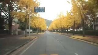 岡大前の銀杏並木(車載)