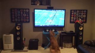 My dog missed football