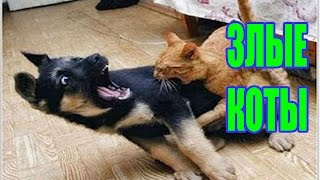 КОТЫ-КОЗЛЫ!!! / Самые ржачные приколы с котами 201...
