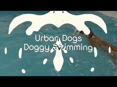 Urban Dogs Doggy Swimming