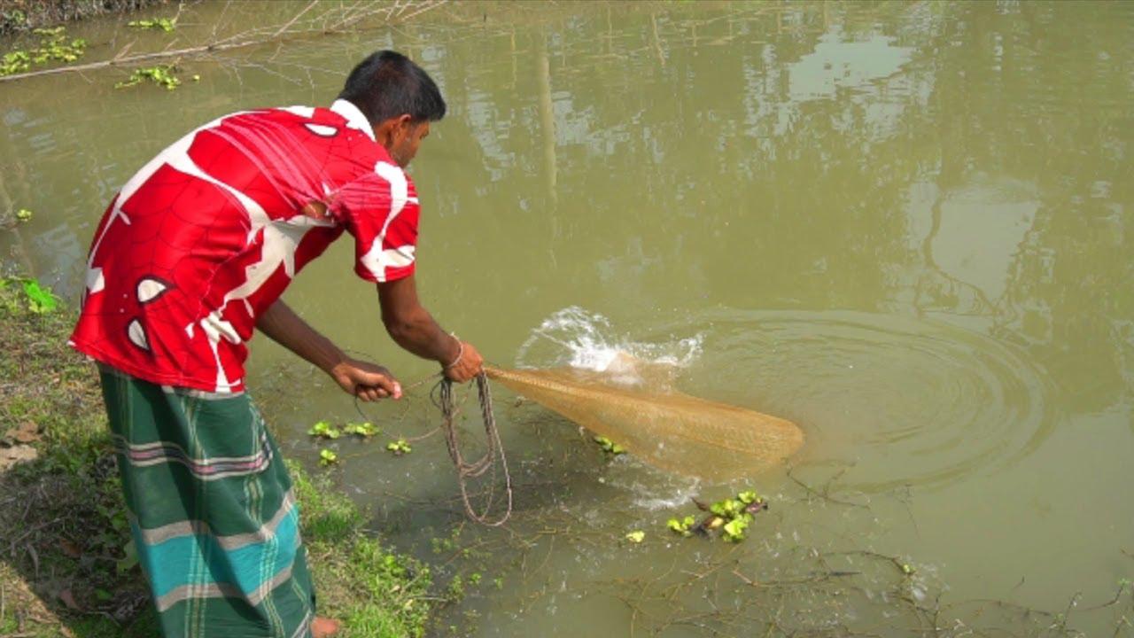 Download Cast Net Fishing | Traditional net fishing in village rpond | Fishing in Village by ABTVbd