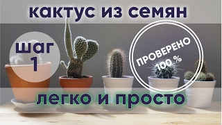 видео Выращивание кактусов из семян