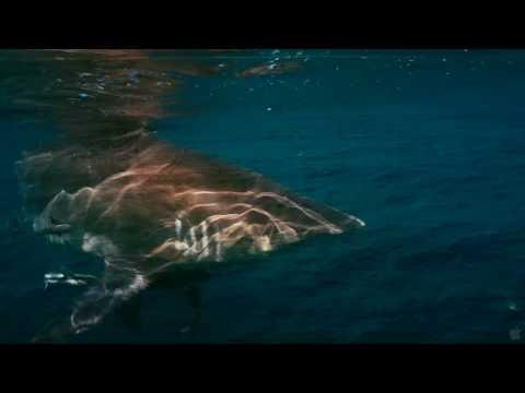 Download Trailer wild ocean HD