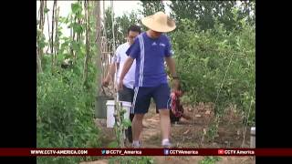 China's city dwellers rent farmland to grow food