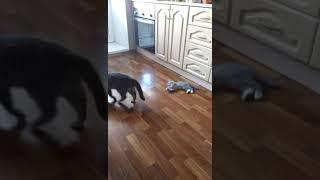 Как рождаются котята(прикол)