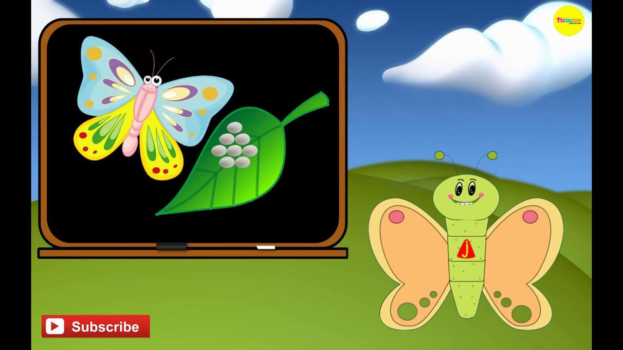 دورة حياة الفراشة مع سوبر جميل Youtube