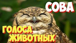 Голоса птиц и звуки животных. Звуки природы слушать онлайн СОВА
