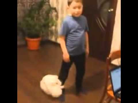 cat vine  Cat attacks boys leg