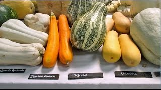 Amazing! 300 Different Varieties Of Squash From All Around The World...And Their Names!