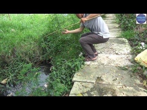 Nghe ùng ục dưới cái hố sau nhà không biết thứ gì bên dưới/monster under the pond