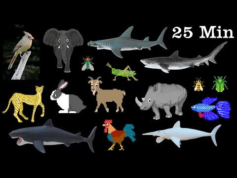 Animals Collection - Sharks, Farm Animals, Pets, Insects & More - The Kids' Picture Show