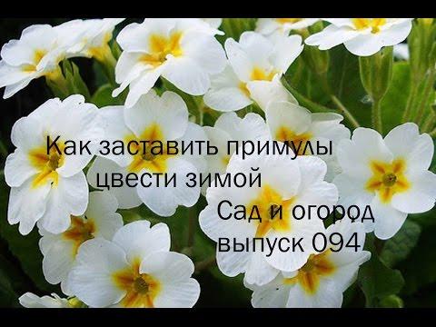 Цветы-многолетники для дачи - какие посадить летом и