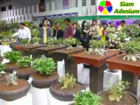 Ornamental Plant Contest, Thailand, May 2008