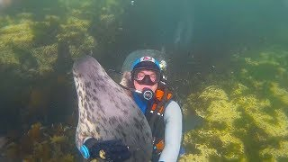 Wild Grey Seal Gives Doctor Loving Embrace Whilst Diving Off Coast