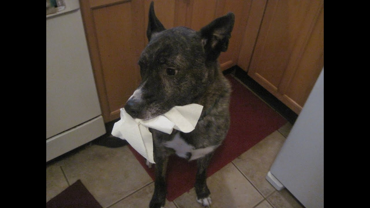 Tank Sneaking by with a mouthful of paper towels! Funny ...