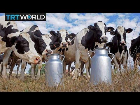 Turkey's agriculture sector looks to modernize   Money Talks