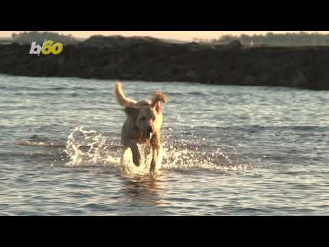 Jodi Stewart - Your Dog Can Travel and Earn Some Money While Enjoying The Good Life