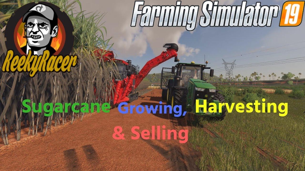 Farming Simulator 19!!!! Sugarcane Growing Harvesting & Selling!!!!