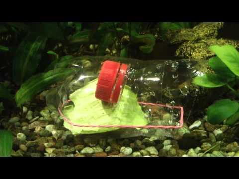 Самодельная ловушка для аквариумных улиток